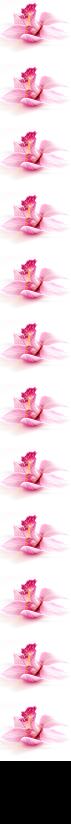 Orchideenborte